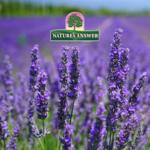 Miks valida Nature's Answer taimseid ekstrakte?